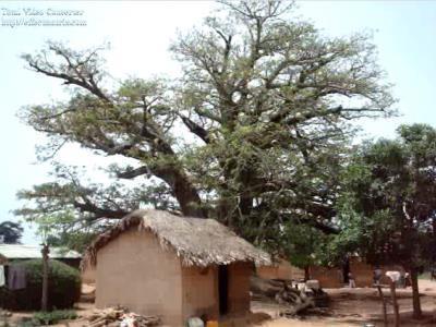 Baobab 400 X 300[1].jpg